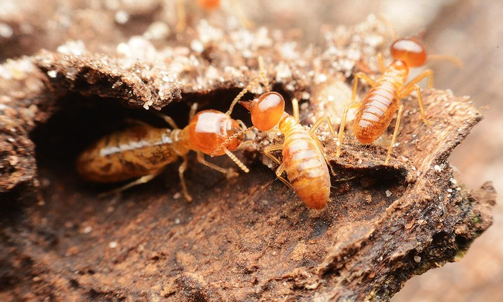 Termite Treatment Services
